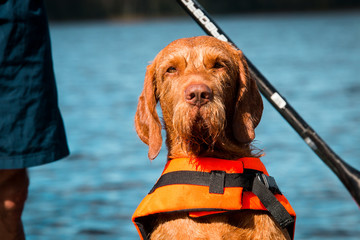 stand-up-paddle-surf-perro